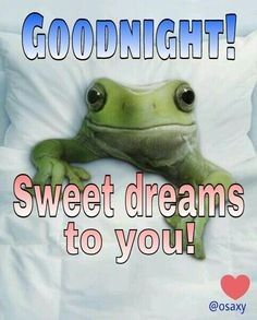 Good night, my Beautiful 🐸🐸🐸. Sweet dreams to you, Sweetheart. Good Night Greetings, Good Night Messages, Good Night Quotes, Good Morning Good Night, Morning Quotes, Night Time, Frog Quotes, Me Quotes, Funny Quotes