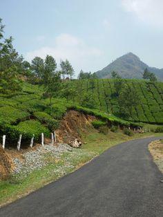 Munnar Munnar, Kerala, Insight, Country Roads, Tours