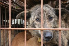 A dog is allegedly caged up outside in blazing hot temperatures for hours on a daily basis. Demand this dog be rescued and that the owners be prosecuted if such animal cruelty is found to be taking place.