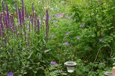Gartengeflüster – zarte Blüten für ein kleines Idyll » Malerische «Drifts»