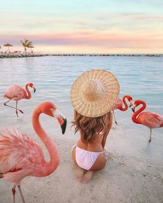 50 Ideas For Affordable Honeymoon Packages ❤ affordable honeymoon packages aruba with pink flamingos cmcoving #weddingforward #wedding #bride #affordablehoneymoonpackages Summer Aesthetic, Travel Aesthetic, Affordable Honeymoon, Best Honeymoon Spots, Best Honeymoon Destinations, Travel Destinations, Flamingo Beach, Flamingo Hotel, Pink Flamingos