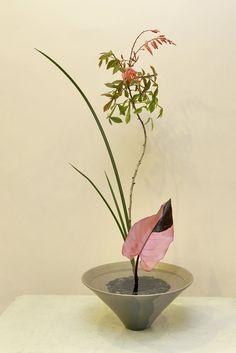 Ikebana Ikenobo shoka shimputai japan flower arrangement.Indonesia
