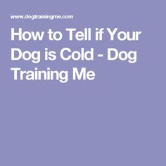 How to Tell if Your Dog is Cold - Dog Training Me
