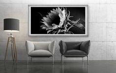 Sonnenblume Fotografie Download Panorama Bild von FotokunstVonAlex