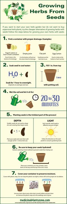 Growing Herbs from Seeds Infographic