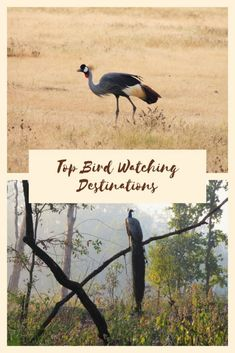 Best bird watching destinations in the world #birds #traveldestinations #wildlife
