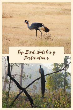 Best bird watching destinations in the world #birds #traveldestinations #wildlife