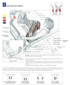 Angled Leg Press ♦ #health #fitness #exercises #diagrams #body #muscles #gym #bodybuilding #legs