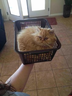 Kitty In A Basket - http://cutecatshq.com/cats/kitty-in-a-basket/