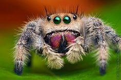 Les araignées et les insectes sont les sujets préférés de Thomas Shahan, photographe américain spécialisé dans la macro photographie.