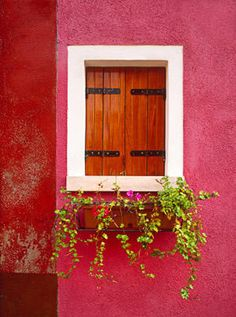 deep honey maple wood windows against pink - italy. photo by jimnilsen
