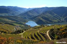 Douro River Valley, the winding, a terraced region that produces the country's beloved port wine. This is Portugal's answer to Germany's romantic Rhine River Douro Portugal, Rio, Valley Landscape, Big Sur California, Douro Valley, Port Wine, Valley View, Top Place, Trees To Plant