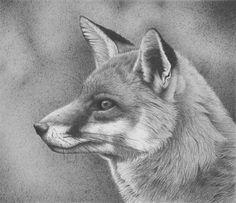 FOX  Fran Meredith Clive (Clive Meredith)
