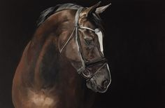 Tony O'Connor Equine Art 'Dante' X oil on canvas. I love this painting! Image ref by exclusive collaboration with Annie Damhof Photography and Zeelen and Damhof Photography 24616 Beautiful Horses, Animals Beautiful, Horse Oil Painting, Horse Paintings, Horse Portrait, Paintings I Love, Equine Art, Horse Girl, Animal Drawings