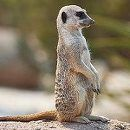 Amazing Desert Animals: let's have a look on those animals those who spend their tough life on dry deserts. Animal Fact File, Animal Facts, Art Et Nature, Desert Animals, Namib Desert, Motifs Animal, Wildlife Conservation, Wildlife Park, Outdoor Survival