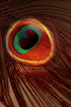 Peacock Feather. by loracia