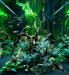 Low maintenance aquarium by Oliver Knott