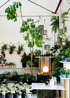 The Plant Society in Collingwood by Jason Chongue   Yellowtrace