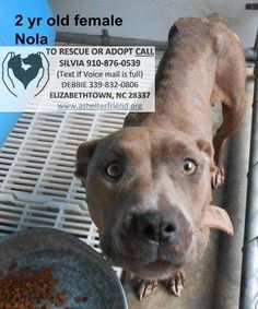 Animals are located at the Bladen County Animal Shelter, 506 Smith Circle, Elizabethtown, NC 28337  SHELTER HOURS: MON-WED-FRI: 1:00 - 5:30 PM  HOLD TIME UP 9/24 Please CALL NOW IF YOU HAVE ANY QUESTIONS OR are interested in rescuing or adopting. Silvia 910-876-0539 or Debbie: 339-832-0806 !!