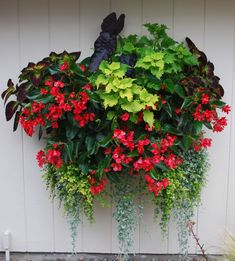 Part shade: black elephant ear, coleus Dipt in Wine & Wasabi, Big Red begonia, creeping Jenny, Silver Falls