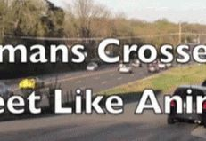 If Humans Crossed The Streets Like Animals (GIFs)