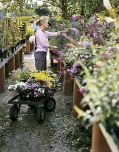 At the nursery, the profusion of colors and scents, varietals and blooms can sometimes make even the most enthusiastic gardener a shrinking violet. But there is an easy-to-adopt strategy for making a visit to the local nursery a successful shopping experience. Garden expert Kevin Reiner leads us through Baker's Acres Greenhouse in Alexandria, Ohio.   - CountryLiving.com