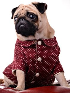 *Everyone* should make an effort for the Christmas party. Dog Jacket by Dogtailor on Etsy, £29.99