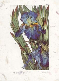 Blue Iris Fairy by Trudi Finch