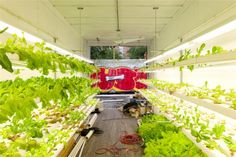 UrbanFarm - tranforming shipping containers into hydroponic gardens