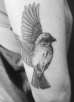 dot work bird
