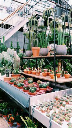plants // annauitbeijerse shot by @elisabethdewaal