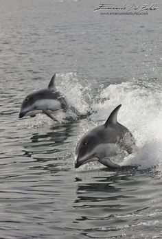Canada, Vancouver Island-Time to play - by Emanuele Del Bufalo- We are surrounded by dolphins, a pod of more than two hundred of them. As soon as the zoodiac began to move, the waves created by the propeller became a very attractive playground. Dozens of dolphins kept coming inleaps, pirouettes and acrobatics only few meters from where we were sitting. from: www.emanueledelbufalo.com The Long-Term Traveler