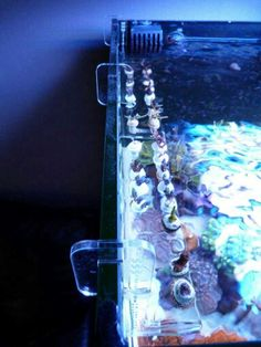 Frag rack Aquarium Design, Reef Aquarium, Voss Bottle, Water Bottle, Aquariums, Exotic Pets, Marine Life, Farming, Terrarium