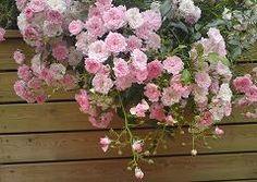 Frodig vekst i blomsterkasser fra Blomsterkasseriet