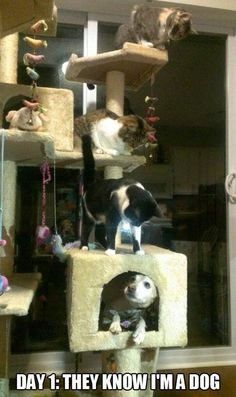cats are crazy.....