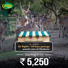 Bhitarkanika Jungle Resorts offer awesome packages for a rejuvenating time amidst the wild. #BhitarkanikaJungleResorts #ExcitingTourPackages