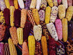 a sampling of Peruvian corn