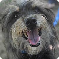 Adopt A Pet :: RUFUS - Memphis, TN