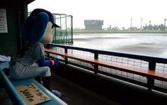 あいにくの雨、水びたしのグラウンドを見つめるドアラ=6日
