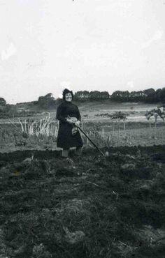 Cavando na horta no Cobelo. Slide de fotografías de Memorias do Vicedo - fotografías antigas de O Vicedo-Lugo-Galicia