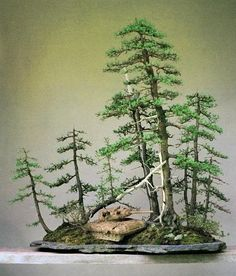 Tiny Forest