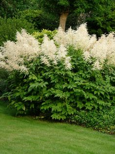 Shade Perennials, Flowers Perennials, Planting Flowers, Flower Farm, Flower Beds, Small Gardens, Outdoor Gardens, Forest Garden, Tall Plants