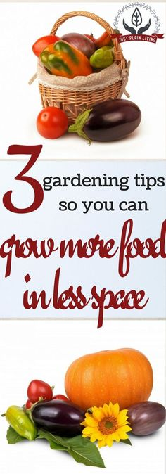 Gardening is not as easy as the magazines make it look. If you've been wondering how to have a successful vegetable garden, here are three important things to know. via @justplainmarie