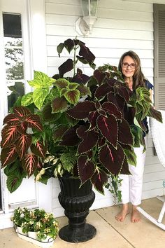 Houseplant Journal The coleus in this planter grew from tiny plants started from seeds in a bright w Container Plants, Container Gardening, Gardening Tips, Succulent Containers, Container Flowers, Vegetable Gardening, Coleus, Growing Plants Indoors, Growing Vegetables