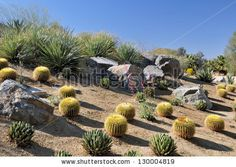 Image from http://thumb7.shutterstock.com/display_pic_with_logo/80792/130004819/stock-photo-a-variety-of-cactus-grows-on-this-hillside-slope-in-palm-desert-california-130004819.jpg.