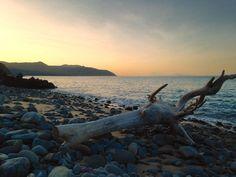 Wangetti Queensland Australia. #wangetti #queensland #australia #beach #sunset #driftwood #greatbarrierreef #reef #live #love #explore #travel #travelaustralia #doepicshit by rideabikeryan http://ift.tt/1UokkV2