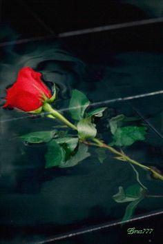 Падающая роза