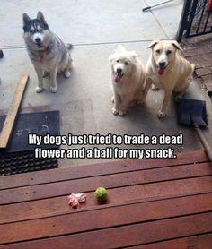 Sounds like my dog. Lol.