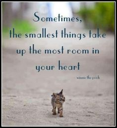 Sometimes the smallest things take up the most room in your heart Winnie The P - Funny Cat Quotes Funny Animal Pictures, Funny Animals, Funny Cats, Cute Animals, Animal Fun, Baby Animals, Cute Kittens, Cats And Kittens, Ragdoll Kittens