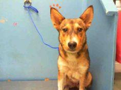 02/12/14 Petfinder  Adoptable | Dog | German Shepherd Dog | Houston, TX | MISSY